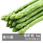 アスパラガス さぬきのめざめ春芽 約1kg 香川県産