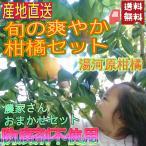 楽しい春の柑橘イロイロ5kgセット スタッフイチ押し 農家さんお勧め おまかせ旬の果実をお送りします 防腐剤不使用 指定地域送料無料 湯河原みかん