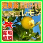 見た目は悪い国産レモン 無農薬 家庭用訳ありレモン 皮まで食べれる安心の防腐剤不使用 産地直送 湯河原檸檬1kg 塩レモン れもん 柑橘
