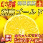 湘南ゴールド2kg 防腐剤不使用 産地直送 ゴールデンオレンジ 黄金柑 不選別 湯河原みかん 柑橘