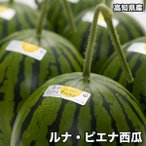高知県産ルナピエナ西瓜 約1.5kg以上 ※北海道・沖縄県は送料必要