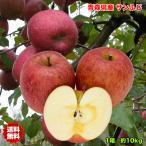 訳あり 青森県産サンふじりんご 約10Kg  送料無料 糖度保証 ※北海道、沖縄離島は除く