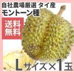 タイ産 ドリアン 1個 2〜2.5kg オープン記念 生鮮 ダイヤモンドスター (M)