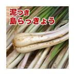 島らっきょう沖縄県産(100g) 量り売り♪500g以上購入で100gオマケ! 旬の島らっきょう!お試し 沖縄野菜(らっきょう 生 国産)  根菜 天ぷら 漬物|野菜|