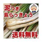 島らっきょう沖縄県産(1kg) 送料無料!2kgご購入で更に200gオマケ!天ぷらや漬物、ビールのお供に美味しい島らっきょうをお取り寄せ 野菜 