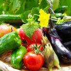 野菜セット 10品 鹿児島県 宮崎県産 送料無料