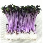 レッドキャベツの芽 1pc