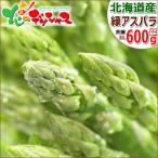 【予約】アスパラガス 北海道産 グリーンアスパラ 600g (共撰/秀品/極太/2Lサイズ) 緑 アスパラ グリーンアスパラガス ギフト 野菜 グルメ 取り寄せ