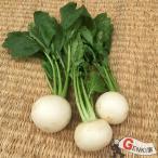 かぶ3個 佐賀七山・福岡糸島の新鮮野菜