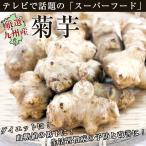 菊芋1袋(約500g) きくいも キクイモ 佐賀県七山、福岡県糸島産 九州産 産地直送野菜