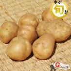 新じゃが 5〜6個  佐賀七山・福岡糸島の新鮮野菜