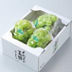瀬戸ジャイアンツ  岡山県産  風のいたずら ちょっと訳あり 3〜5房 約2kg  送料無料 葡萄 ぶどう ブドウ