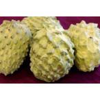 チェリモヤ・アテモヤ通販 別名森のアイスと呼ばれる果物を販売取寄。約1kg 約2個〜約4個 沖縄産