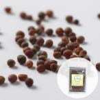 スプラウトシード ブロッコリーの種 100g