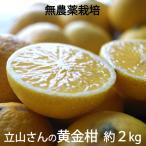 立山農園の黄金柑(ゴールデンオレンジ)無農薬栽培 神奈川県小田原産 混在約2kg *常温便 *送料込
