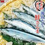 さんま サンマ 秋刀魚 15尾入 1尾あたり約120〜140g 冷蔵 発送時期は9月末〜10月頃 (他商品と同梱不可)