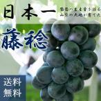 【2020年予約】藤稔約2kg(3房程度)産地直送 ぶどう フルーツ