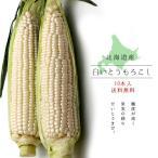白いとうもろこし (ピュアホワイト) 北海道産直 朝もぎとうきび(10本) 生でも美味しいフルーツトウモロコシ 送料無料