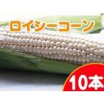 ロイシーコーン(白いとうもろこし) 10本 北海道産直朝もぎとうきび♪ピュアホワイトを凌ぐ新品種ホワイトコーン ※送料無料