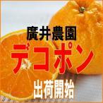 小田原市根府川 廣井さんのおいしい「デコポン」 送料無料