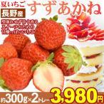 イチゴ 長野産 夏いちご・すずあかね 約600g 1箱 40粒2L大粒 苺 製菓用 冷蔵便 ※代引き不可※