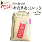 お米25kg 特別栽培米新潟産こしいぶき玄米 25kg/白米4.5kg×5 30年産 送料無料(一部地域を除く) うるち米