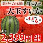 すいか 送料無料 大玉スイカ 熊本県産 1玉 M~L 約5~6kg前後