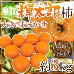 """【送料無料】鳥取産 """"輝太郎柿"""" 訳あり 約3kg 大きさおまかせ【予約 10月以降】"""