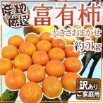 """【送料無料】""""富有柿"""" 約5kg 大きさおまかせ 訳あり 産地厳選【予約 11月以降】"""