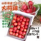 【予約】 プレゼント ギフト さくらんぼ 大将錦 山形県産 500g(500g×1P) 2L バラ詰