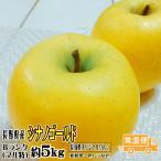 ギフト りんご シナノゴールド 約5kg Bランク マル特 CA貯蔵 長野県産 送料無料 フルーツ リンゴ 信州