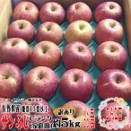 訳ありセール りんご サンふじ 約5kg 小玉20玉 Cランク 家庭用 糖度13度以上 長野県産 送料無料 フルーツ リンゴ 信州 ワケアリ わけあり