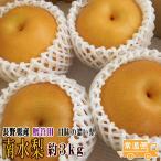 南水梨 贈答用 約3kg (6〜8玉) 長野県産 予約 送料無料 フルーツ ギフト 甘みの濃い梨 ナシ なし