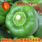 【発送11〜6月】 【送料無料】肉厚柔らかいつやつやピーマン  沖縄県産 ビッグピーマン5kg   トマトの約5倍のビタミンCが含まれてます!
