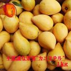 カニステル1kg【発送1月〜7月】 なにこれ?ジャガイモ?卵の黄身?