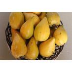 【週末セール】不思議な果実 カニステル1kgエッグフルーツ 焼き芋のような果実
