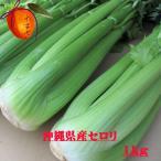 沖縄県産野菜  セロリ 約1kg 【発送 12〜4月】