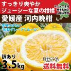 河内晩柑 みかん 和製 グレープフルーツ 訳あり 4kg 送料無料 愛媛産 10〜15個入り