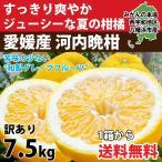 河内晩柑 みかん 和製 グレープフルーツ 訳あり 7kg 送料無料 愛媛産 15〜25個入り