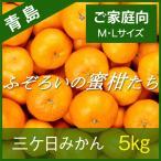 三ケ日みかん 青島みかん 静岡 三ヶ日 5kg ふぞろいの蜜柑たち M・Lサイズ ご家庭向け