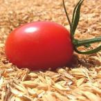 アイコ(ミニトマト) 1kg 熊本県産 送料別/ 嘉島町・藤瀬さんのトマト