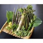 天然 山菜 山菜天ぷらセット500g 天ぷらが美味しい 春の味覚 山の幸 5,6種類を採りたて産地直送 天ぷらパーテイで食べ較べ