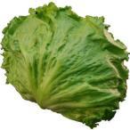 レタス(れたす) シャキシャキ食感が魅力! サラダ野菜!! 1玉 【福岡・長崎産】