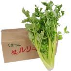 【箱売り】 セロリ 1箱(5〜10株入り) 長野産・熊本・福岡産(時期により産地が変わります。) 【業務用・大量販売】