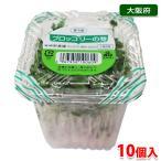送料無料 大阪府産 ブロッコリーの芽 10パック入り箱