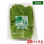 徳島県産 サンチュ 秀品 20パック(1パック10枚入り)