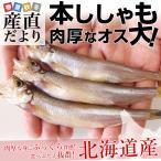 送料無料 北海道産 本ししゃも 肉厚なオス 30尾 約700g 柳葉魚 シシャモ