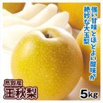 梨 鳥取産 王秋梨 ご家庭用 5kg 1箱 送料無料 和梨 おうしゅう 希少品種 訳あり