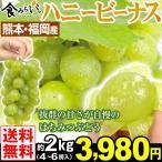 ぶどう 熊本・福岡産 ハニービーナス 約2kg1箱 4〜6房 送料無料 冷蔵便 白ブドウ はちみつぶどう