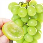 ぶどう 和歌山産 ご家庭用 シャインマスカット 2房1箱 送料無料 葡萄 ブドウ 食品